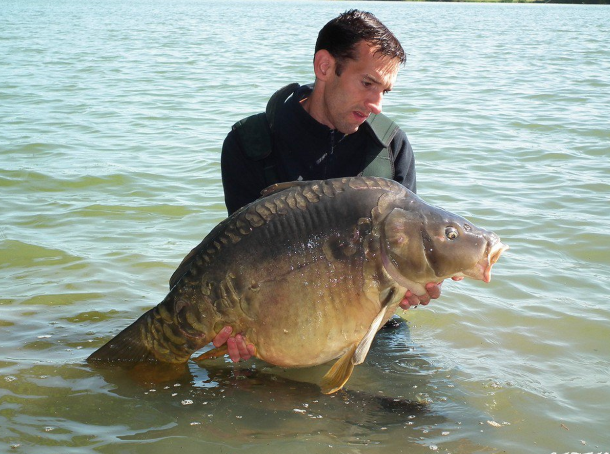 Group of French carp anglers attacked, one might even lose eye